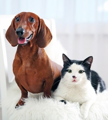Cat and Dog Sitting on Chair